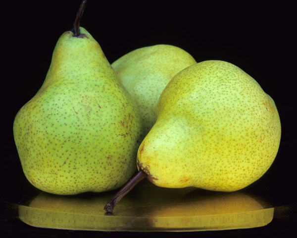 Green and Gold (pears)